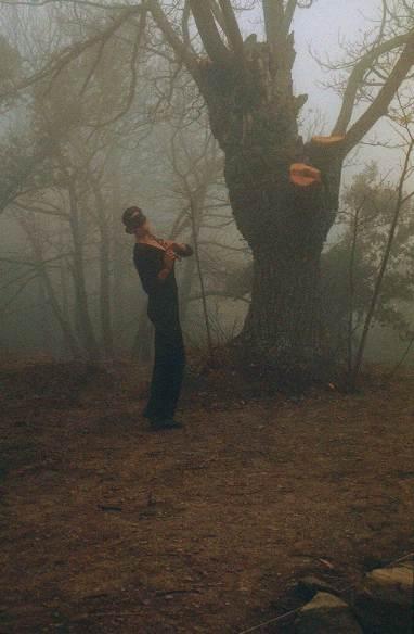 Musica en el bosque
